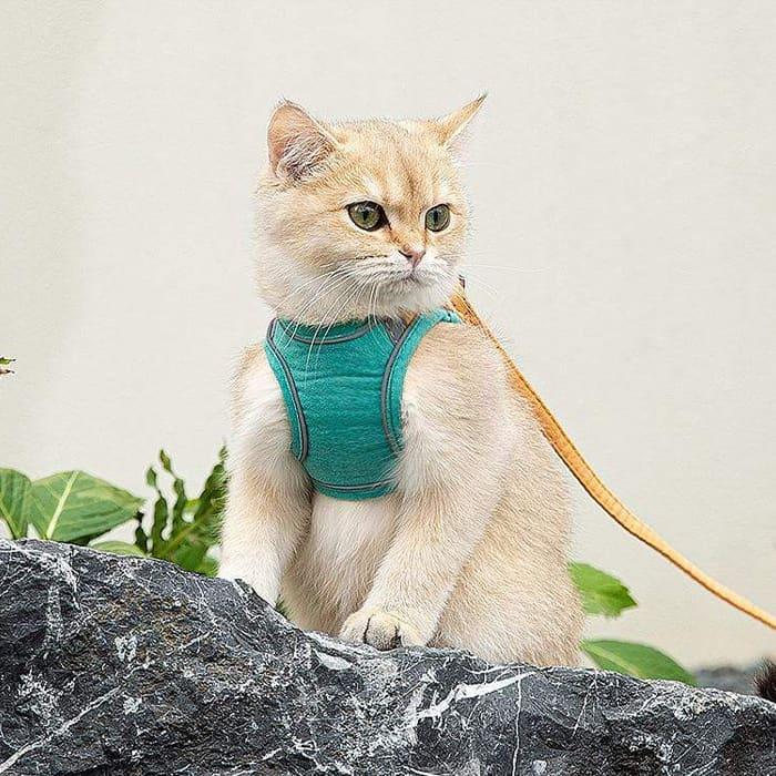 Pro bezpečnost kočky image